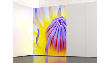 Slimline Exhibition Light Boxes